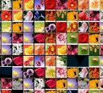 Маджонг цветы — играть бесплатно и во весь экран на Gamestik